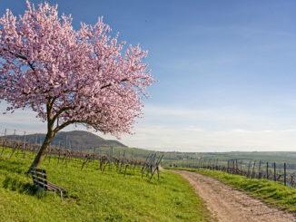 Rheinland Pfalz: Der Süden (Pfalz)